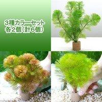 メダカ金魚藻 ライフマルチ(茶) カボンバ 3種カラーセット 各2個(計6個)