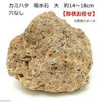 カミハタ 吸水石 大 穴なし 約14~18cm テラリウム パルダリウム 着生 コケ