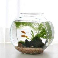 (水草)おしゃれなガラス製金魚鉢 太鼓鉢 中 金魚飼育セット 説明書付