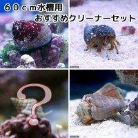 貝ヤドカリ 60cm水槽用 おすすめクリーナーセット コケ底砂の掃除(1セット)