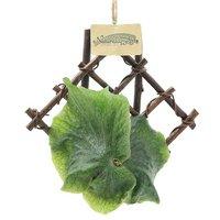 コウモリラン ビカクシダ グランデ ココヤシ吊り鉢植え 格子仕立て(1個)