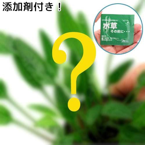 (水草)おまかせクリプトコリネ(10ポット分)+水草その前に 1g(2L用) 本州四国限定 熱帯魚