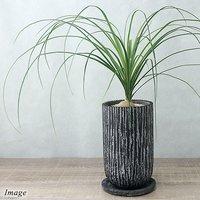 トックリラン 陶器鉢植え オベリスクトールL 黒(1鉢) 受け皿付き 北海道冬季発送不可