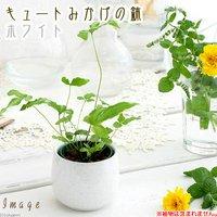 キュートみかげの鉢 ホワイト(φ7.0×H7.0cm)(ハイドロ苗6φに対応)