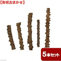 形状おまかせ 山椒の木 細枝 ショート 5本セット DIY素材 インテリア用 レイアウト素材
