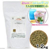 国産 うさぎの食事 プレミアム 1.2kg 全成長段階用 たんぽぽ水耕栽培セット