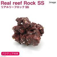 Real Reef Rock(リアルリーフロック) バクテリア付き SSサイズ(1個)(形状お任せ)