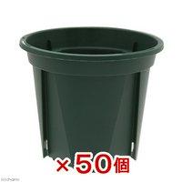 スリット鉢 EUPOT 8cm モスグリーン 50個入り