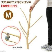 天然素材の大きな止まり木 M 土台なし フィリピン産天然木 形状おまかせ