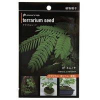カミハタ テラリウムシード ネムノキ 20粒 パルダリウム コケリウム 盆栽