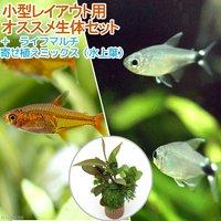 (水草)小型レイアウト用オススメ生体セット 2種(6匹)+ライフマルチ 寄せ植えミックス(水上葉) 1個