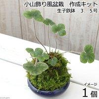 小山飾り風盆栽作成キット 生子鉄鉢 3号(1セット)