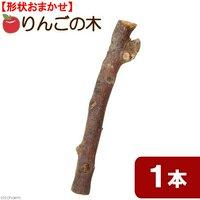 長野県小布施産 天然素材のりんごの木 置き型パーチ 約30cm~40cm 形状おまかせ 1本