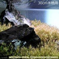 30cm水槽用 ロタラsp.ワイナード(水上葉)(無農薬)(50本)&風山石 草原セット