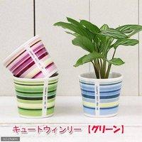 アウトレット品 キュートウィンリーの鉢 グリーン(φ7.5×H6.7cm)(ハイドロ苗6φに対応) 訳あり