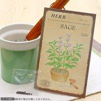 ハーブ HERB (セージ) 品番:810 家庭菜園