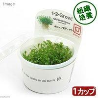 組織培養1-2-GROW! グロッソスティグマ トロピカ製(無農薬)(1カップ)