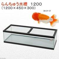 らんちゅう水槽 1200(1200×450×300)120cm金魚水槽亀水槽(単体) 代引不可
