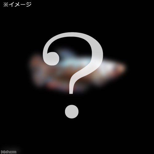 (熱帯魚)ベタ・ハーフムーンプラガット 色指定なし(メス)(1匹) 北海道・九州航空便要保温