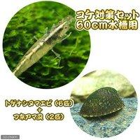 コケ対策セット 60cm水槽用 トゲナシヌマエビ(6匹) + フネアマ貝(2匹)