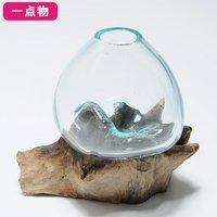 一点物 ラウンドガラス 流木スタンド付(237971)コケ テラリウム ガラス インテリア 瓶