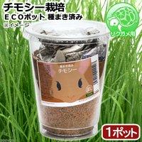 種まき済み チモシー栽培 ECOポット(1ポット) リクガメ用 カメ 餌