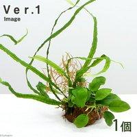 Plants Arrangement ザ ボンサイ Ver.1(1個)