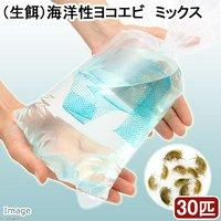 生餌 エサ用海洋性ヨコエビミックス(30匹)