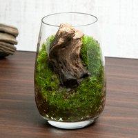苔テラリウム 流木 グラス レイアウト完成品(1個)