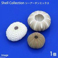 貝殻 シェルコレクション シーアーチン ミックス(1個)(形状おまかせ)
