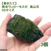 巻きたて 南米ウィローモス 風山石 SSサイズ(8cm以下)(無農薬)(3個)