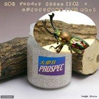 ニジイロクワガタ 幼虫(1匹) + 大夢B プロスペック 800cc 1本 説明書付 外国産クワガタ