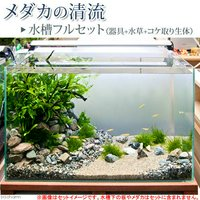 (エビ貝)メダカの清流 水槽フルセット(器具+水草+コケ取り生体) 説明書付き 飼育セット