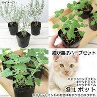 ハーブ苗 猫が喜ぶハーブ 3ポット(1セット) 家庭菜園