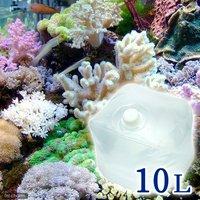 足し水くん テナーボトル 天然海水(海洋深層水) 10リットル