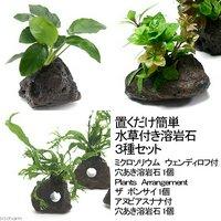 置くだけ簡単 水草付き溶岩石3種セット(ミクロアヌビアス有茎草)