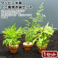 グッピー用水草 ミニ素焼き鉢セット(1セット)
