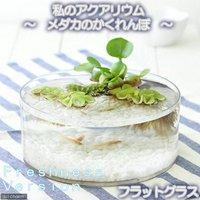 私のアクアリウム~メダカのかくれんぼ フレッシュネスバージョン~ フラットグラス 飼育セット