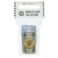 WORLD PLANT COLLECTION ジャカランダ