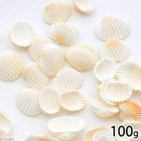 貝殻 シェルコレクション ハイガイ(特小) 100g 貝殻