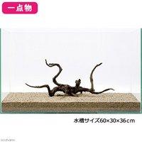 一点物 極上流木単体 60cm水槽用 214037