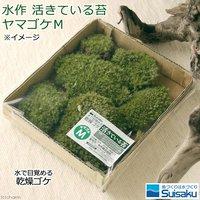 水作 活きている苔 ヤマゴケM ドライタイプ