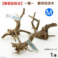 極 磨き枝流木 M 形状お任せ