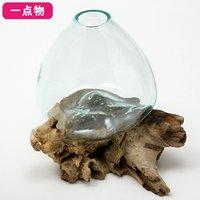 一点物 ラウンドガラス 流木スタンド付(239483)コケ テラリウム ガラス インテリア 瓶