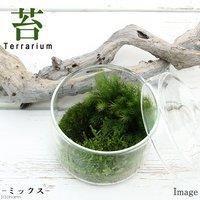 苔Terrarium 苔ミックス 蓋付カップL 説明書付