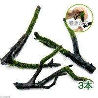 巻きたて ウィローモス 枝状流木 Sサイズ(約10cm~)(無農薬)(3本)