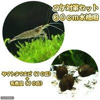 コケ対策セット 60cm水槽用 ヤマトヌマエビ(10匹) + 石巻貝(10匹)
