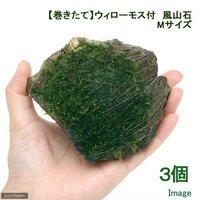 巻きたて ウィローモス 風山石 Mサイズ(約14cm)(無農薬)(3個)