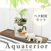 (水草)私のアクアリウム アクアテリア P110 ベタ飼育セット(生体・植物・ヒーター付き)おしゃれ水槽セット