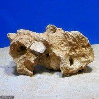化石サンゴ バクテリア付き Mサイズ(20cm前後)(1個)(形状お任せ)